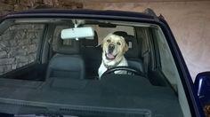 Il mio cane ha preso la patente!!!!