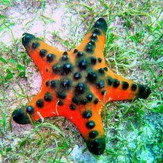 Viaje al fondo del mar II (peces, corales y arrecifes) | Banco de Imágenes (shared via SlingPic)