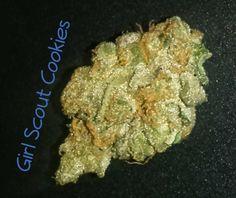 My Favorite Strains: Girl Scout Cookies | Weedist