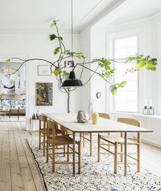 giant pruned fiddle leaf fig tree above table