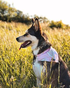 ma heart .... Husky, Heart, Dogs, Stuff To Buy, Animals, Toys, Animales, Animaux, Pet Dogs