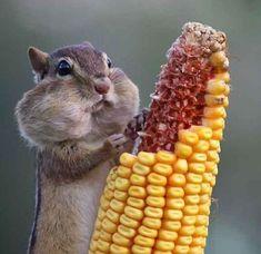 Ohhh how I love me some corn....