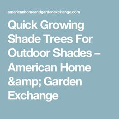Quick Growing Shade Trees For Outdoor Shades – American Home & Garden Exchange