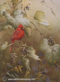 Catherine McClung - Limited Edition Prints, Vineyard Cardinal