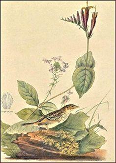 Other Antique Decorative Arts Antique Advertising Jj Audubon Bird Calendar Print Cock Of The Plains