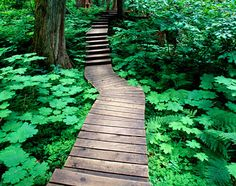 Montana, United States, North America: The Green Mile: A wooden walkway in Glacier National Park Wooden Path, Wooden Walkways, Walking Paths, Garden Features, Types Of Soil, Garden Paths, Where To Go, Wilderness, North America