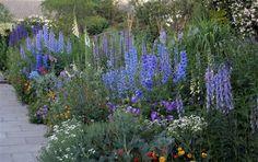 Delphinium in the blue border 2009, The Dillon Garden, near Dublin, Ireland, uncredited photo.