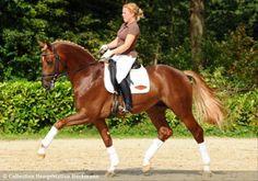 """Quando sudi per ore per giorni e poi ti sentì dire """"l'equitazione non è uno sport"""""""