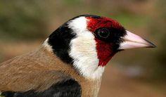 Pájaros Archives - Página 5 de 9 - Animal Mascota