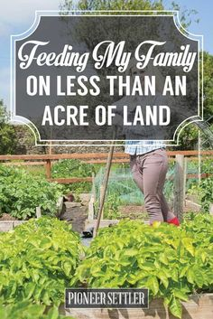 Feeding My Family on Less Than an Acre of Land | How To Grow All The Food You Need In Your Own Backyard | Homesteading And Gardening Tips by Pioneer Settler at http://pioneersettler.com/feeding-family-less-acre-land/