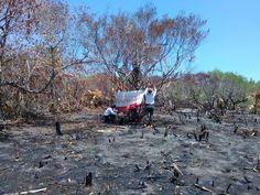 Autoridades mexicanas clausuran 36 proyectos turísticos ilegales en Isla de Holbox