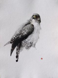 Gyr Falcon, Martens