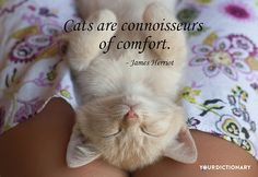 Cats are connoisseurs of comfort.