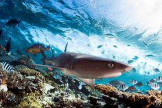 Fiji .. Allen Walker Photography