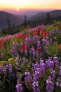 Beautiful wild flowers on a hillside.