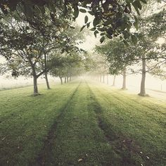 Walking here
