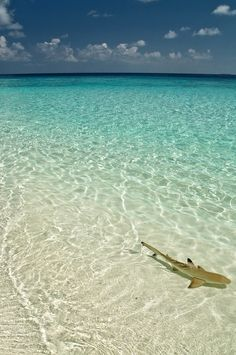0ce4n-g0d:     Fihalhohi Island -South Male (Kaafu) Atoll - Maldives 2009 e t d j t pictures