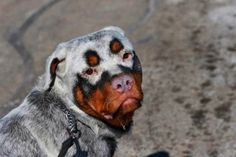 5 Dogs With Extremely Strange Fur
