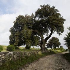 Pour cette 3e édition c'est encore un chêne qui remporte les faveurs du public: le chêne vert François 1er en région Poitou-Charentes, a obtenu 10 533 votes et reçoit le «Prix du public». -  Le chêne vert François 1er, planté à la naissance de ce dernier à Cognac, est l'un des nombreux trésors cachés de la vallée de l'Antenne en (Charente). Situé en haut d'une colline, depuis bientôt 520 ans, telle une vigie au carrefour des sentiers de randonnée, dont l'un mène au magnifique moulin de ...