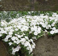 Geen onkruid meer! Blijven mooi en groen in de winter, vullen lege plaatsen op. Met heel veel keus voor iedere tuin, ook voor schaduwplaatsen, met foto`s en