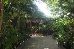 We love the lush grounds at Ramon's Village scuba diving resort!