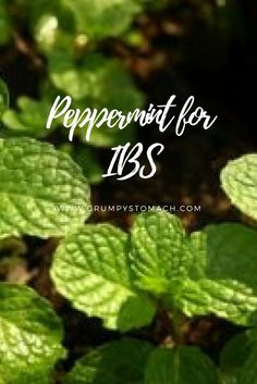 Give peppermint a try! I've been using peppermint for IBS cramps and discomfort for over six years. I love the instant and powerful relief it gives me.