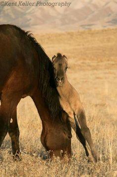 True Love - New filly and her mom - Great Basin Desert, Utah. http://kent-keller.artistwebsites.com/