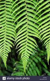 New Zealand tree fern plants에 대한 이미지 검색결과
