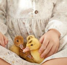 Farm Animals, Cute Animals, Farm Lifestyle, Future Farms, Farms Living, Country Life, Country Charm, Country Living, Cottage Living