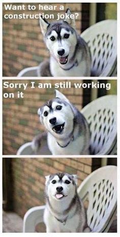 Dog Memes Of The Day 32 Pics Love - Funny Husky Meme - Funny Husky Quote - Dog Memes Of The Day 32 Pics Lovely Animals World The post Dog Memes Of The Day 32 Pics Love appeared first on Gag Dad. Husky Humor, Funny Husky Meme, Funny Dog Jokes, Dog Quotes Funny, Dad Jokes, Pun Husky, Funny Dog Pics, Husky Jokes, Baby Quotes