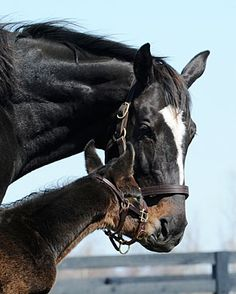 Zenyatta and her Bernardini colt