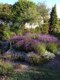 annasträdgård - Sommar