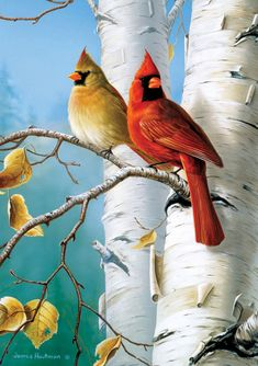 Image detail for -Wildlife art prints plus original paintings with a wide selection from . Pretty Birds, Beautiful Birds, Cardinal Birds, Bird Drawings, Bird Pictures, Colorful Birds, Wildlife Art, Wild Birds, Bird Art