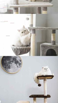 Wholesale Zeze Five-storey Cat Climbing Frame Sisal Cat Jumping Platform Tree Cat House Cat Scratch Plate Cat Shelf Pet Cat Toy from Our website with high quality and fast shipping worldwide. Cat Shelves, Shelf, Tree Furniture, Cat Scratching Post, Cat Climbing, Cat Supplies, Cat Tree, Sisal
