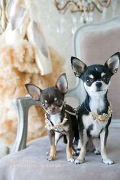 Companions !!!! Yuppypup.co.uk provides the fashion conscious with stylish…