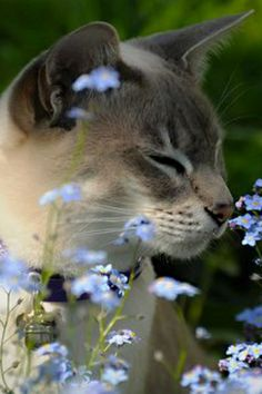 <3 kitty taking time to smell the flowers <3