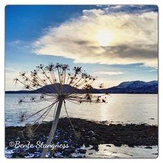 User: stangness Tromso, Visit Norway, Photo Pin, Finland, Denmark, Traveling, Dreams, Instagram, Beach