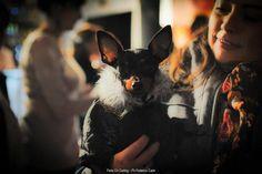 Desfile Dia del Animal-2012