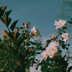 ☁️ #alternative #rose #hipster #retro #tumblr #vintage #grunge #sky #indie #L4L #FF #instafollow #random