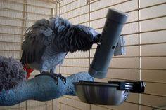 papegaai doe het zelf foeragemolen - foerage molen - fourage mill parrot - Futtermühle Papagei