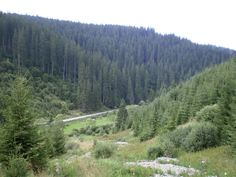 Borsec, Harghita, Romania Lots/Land  For Sale - 24,7 Acres of Land and Forest - IREL is the World Wide Leader in Romania Real Estate