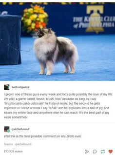 This is a serious contender for cutest dog story ever Kiss Stories, Dog Stories, Sweet Stories, Pomeranians, Pet Memes, Funny Animal Memes, Funny Memes, Animal Humor, Pitbull Training