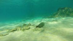 Fundo do mar em Kaanapali Beach
