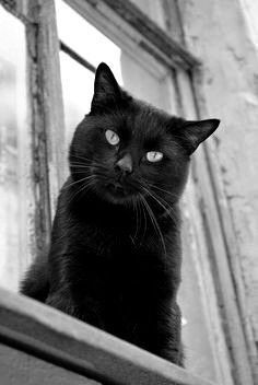 Teen čierna mačička fotky