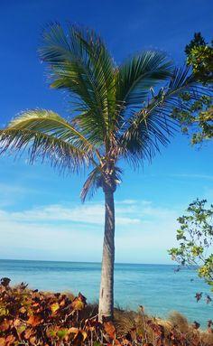 Palm tree in Florida #travel #Florida #smileshare