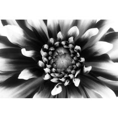 Found it at Wayfair - Daylight III by Ilona Wellmann Photographic Print on Wrapped Canvas