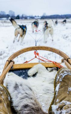 What it's like to go husky sledding in northern Finland. Meet Siberian huskies, wolf dogs, foxes and more and get to experience the pure rush of dog sledding for yourself. Travel in Scandinavia. | Geotraveler's Niche Travel Blog #Finland