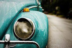 beetle eye.