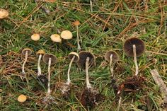 psychedelic mushrooms | Magic mushrooms trip up brain activity