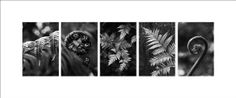 Black and white fern photo New Zealand panorama by NewCreatioNZ, #fern photography #new zealand photography #nature photography